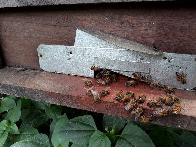 Ong hoa nhãn
