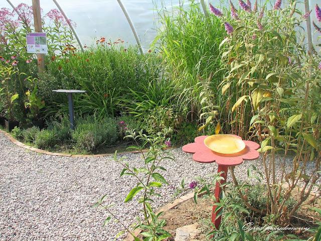 motylarnia, labirynt kukurydzy, ogród przydomowy