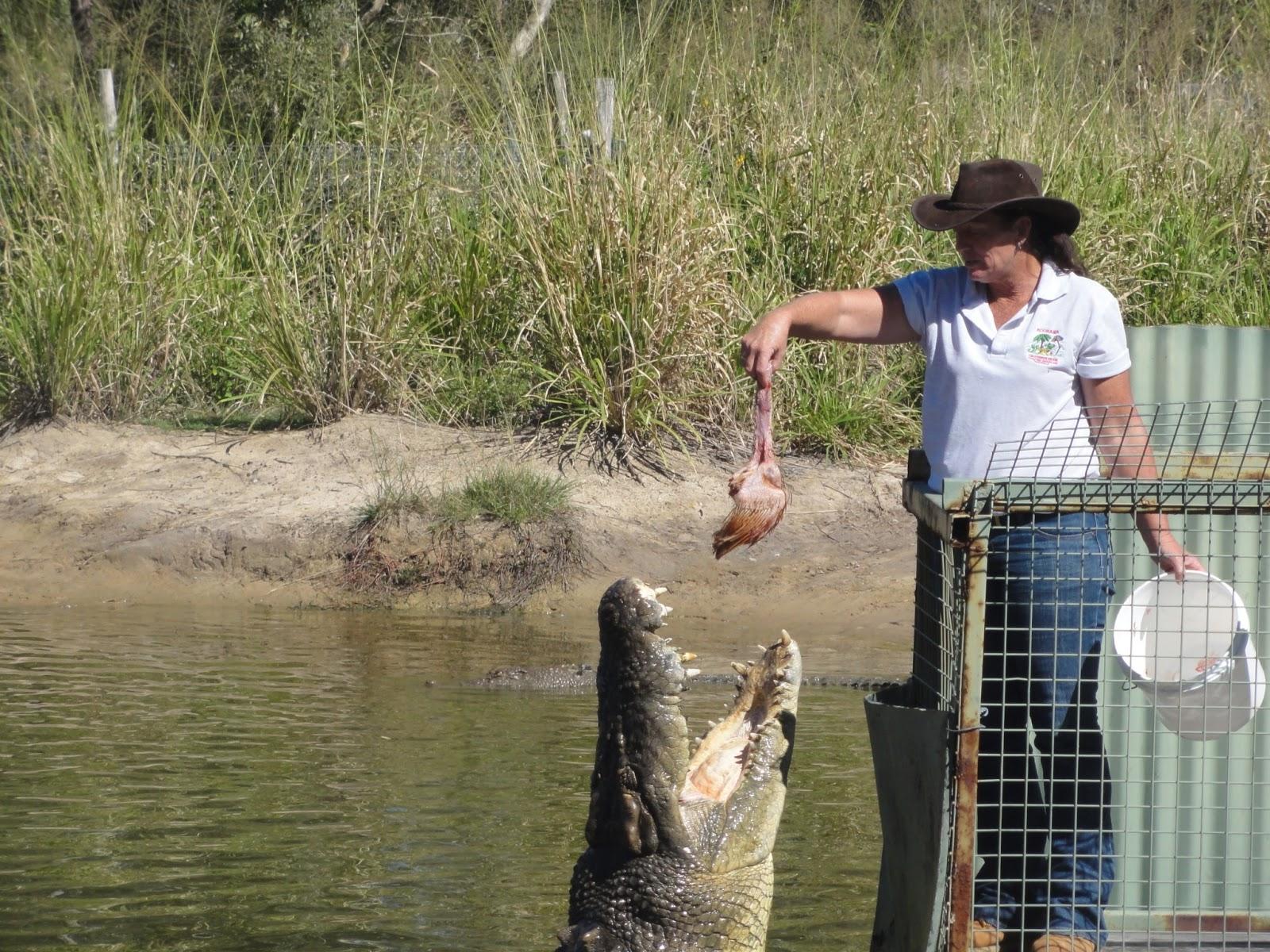 unterschied zwischen krokodil und alligator