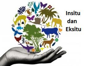 Pengertian, Perbedaan Konservasi Insitu, Eksitu & Contoh-Contohnya