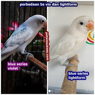 perbedaan blue series vio dengan lightform