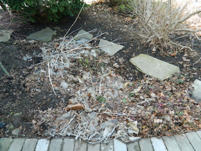 Leslieville Front Yard Spring Cleanup Before by Paul Jung Gardening Services--a Toronto Organic Gardening Company