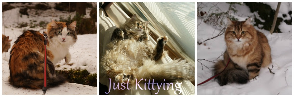Just Kittying