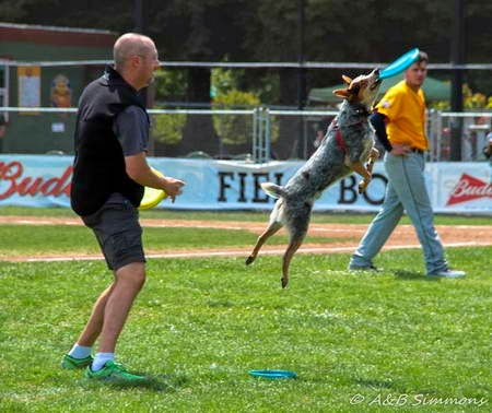 "Vader ""Frisbee Dog"" demonstration in San Rafael"
