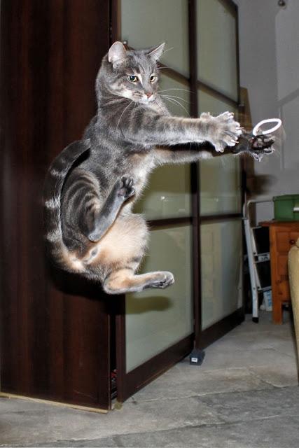 http://kongxie.blogspot.my/2017/06/10-gambar-yang-membuktikan-kucing.html