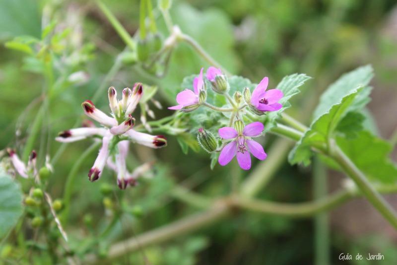 Cómo recoger plantas silvestres con el mínimo impacto ambiental y ...
