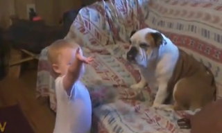 Θα «λιώσετε»! Μωρό μαλώνει τον σκύλο του σπιτιού - BINTEO