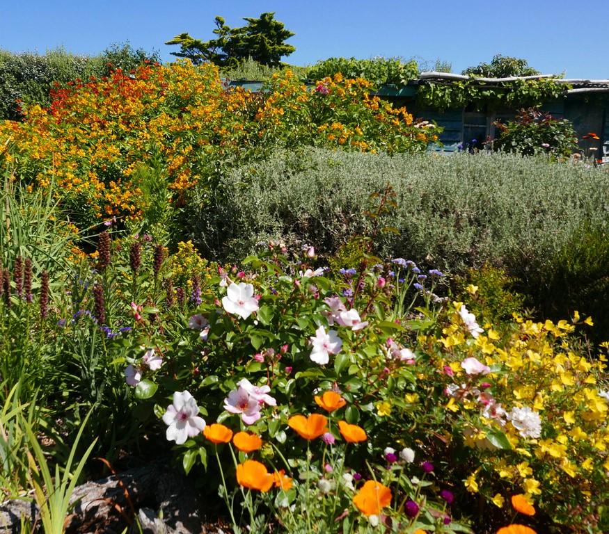 Jardin Eden Du Voyageur Un Mois D Aout Tout Feu Tout Fleur A L Eden
