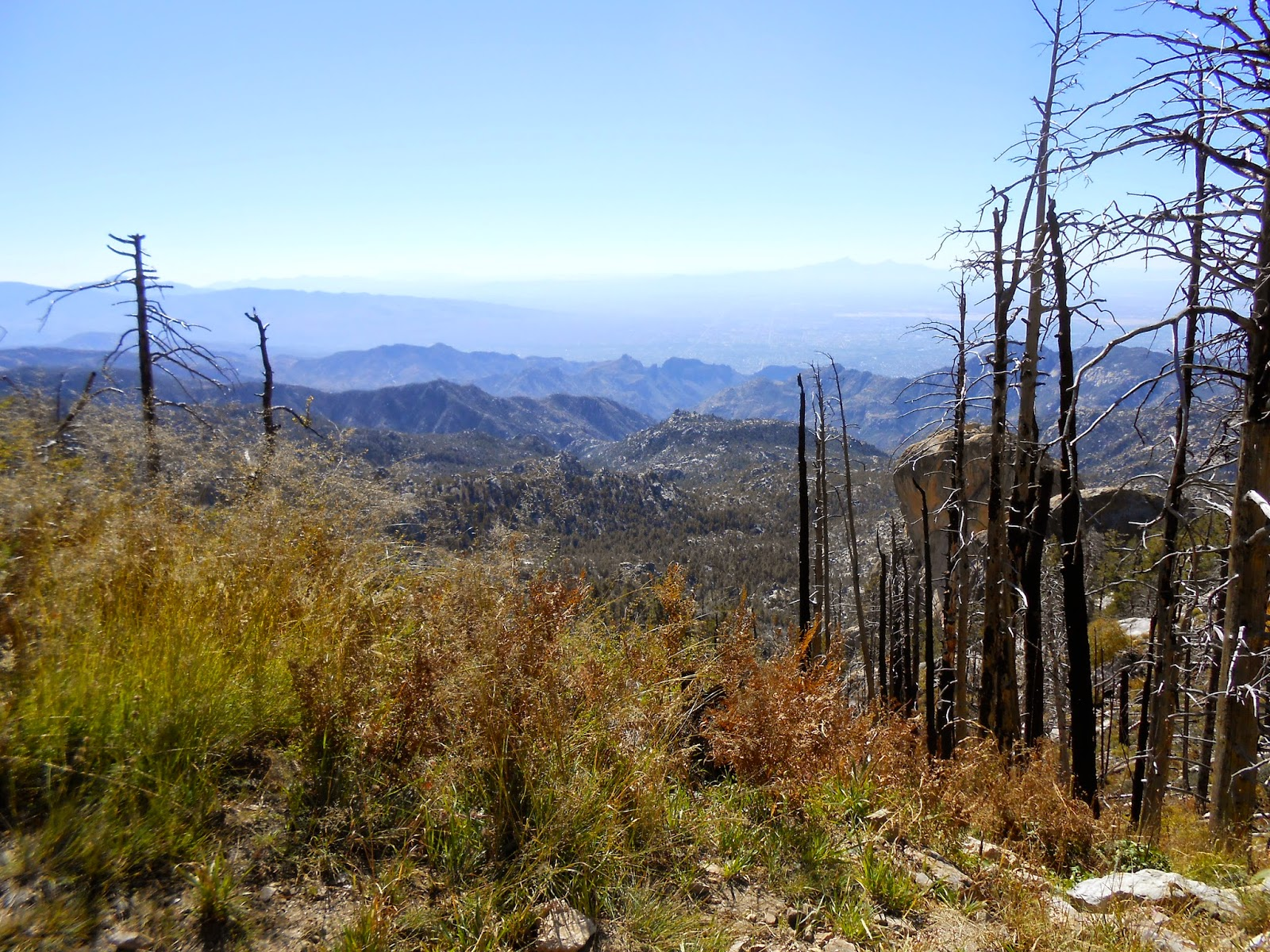 hiking on the top of mount lemmon in the fall