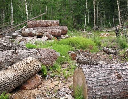 4 Akibat Perilaku Manusia yang Menebang Pohon Secara Liar