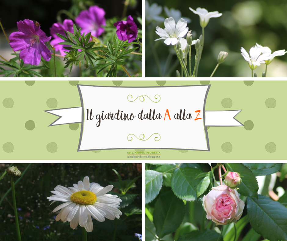 Il giardino dalla a alla z i fiori della settimana un for Fiori dalla a alla z