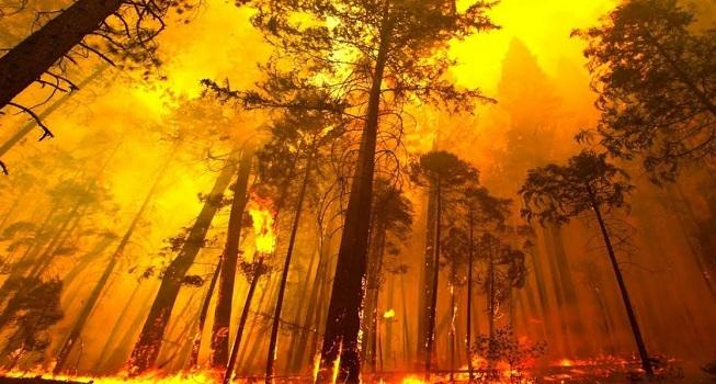 Νεα Πύρινη λαίλαπα και στον Κάλαμο Αττικής - Καίγονται σπίτια - Η φωτιά πάει στο Καπανδρίτι