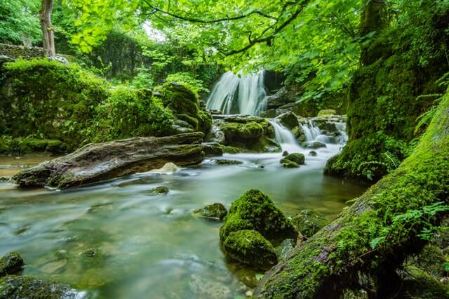 Cascade Creek Environment Fern HD Copyright Free Image