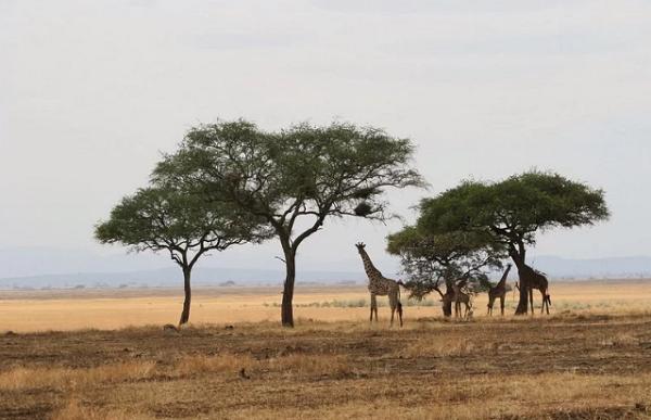 Cagar Alam Maasai Mara, Kenya