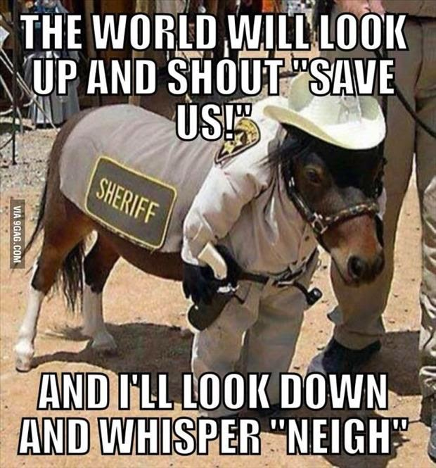 30 Funny animal captions - part 21 (30 pics), captioned animal pictures, sheriff pony