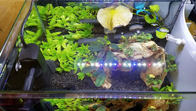 5-gallon planted betta aquarium