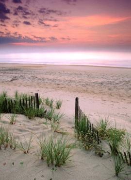 beach dune grass poster