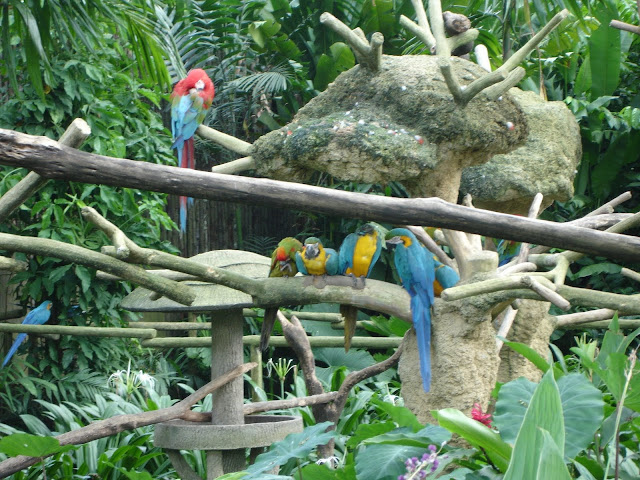 Bali Bird Park for things to do in Bali2