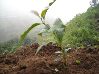 Pentingnya Reboisasi dan Penanaman Pohon