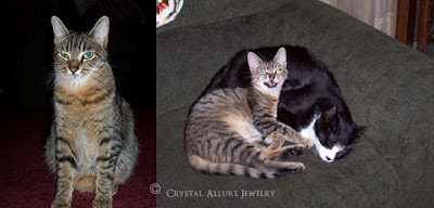 Shelter Pets Adopted by Crystal Allure Jewelry Designer