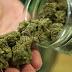 Tíz kilogramm marihuánát találtak Röszkén