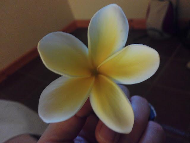 Flores de Isla de Pascua