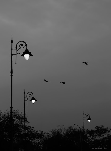 A Black and White Minimal Art Photograph of a Three Lamps and Three Birds, shot at a beautiful evening near Statue Circle, Jaipur