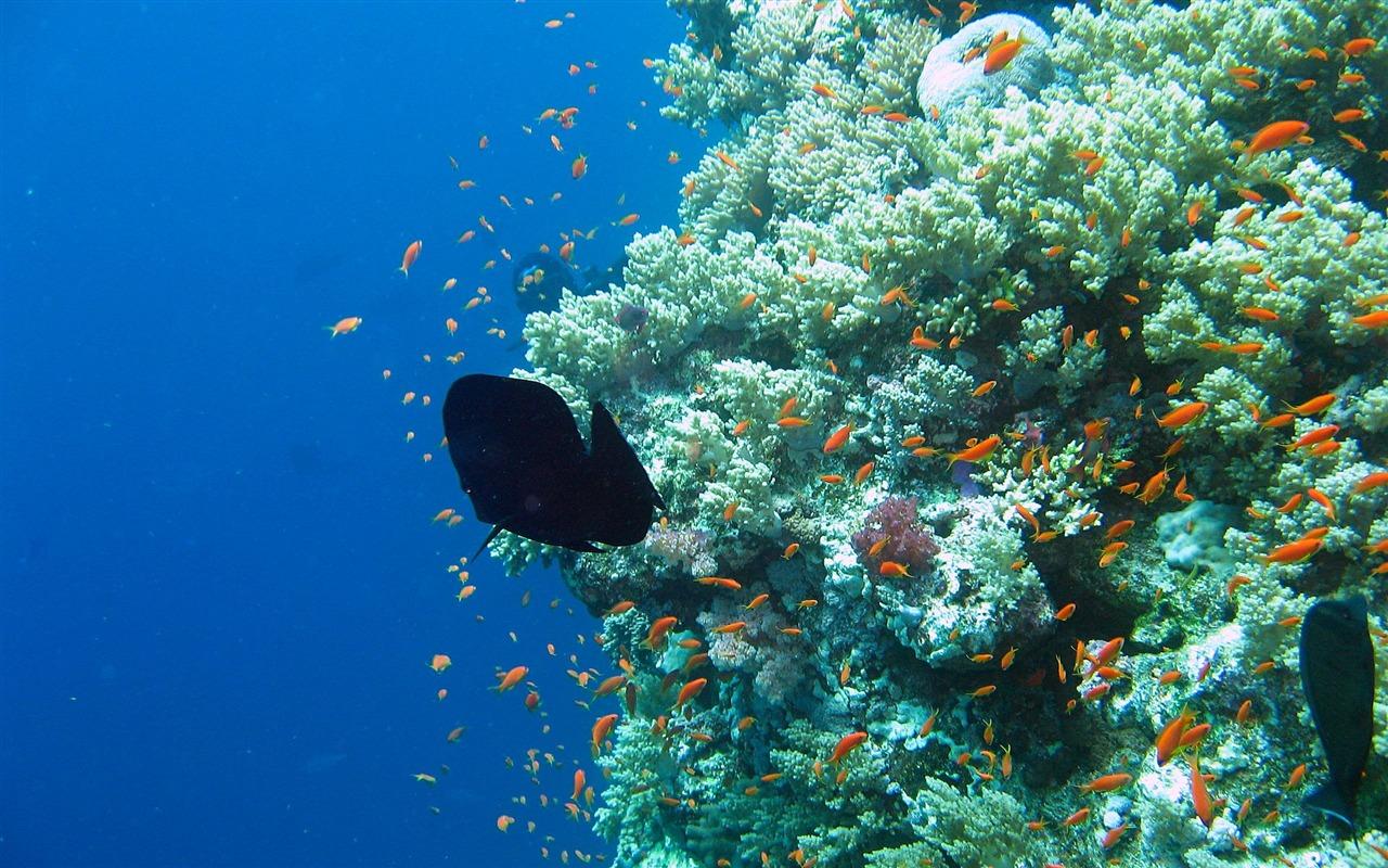 Gena Downs: coral reef wallpaper hd