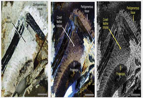 hasil scan laser pada kulit burung dinosaurus