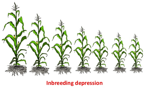Inbreeding depression