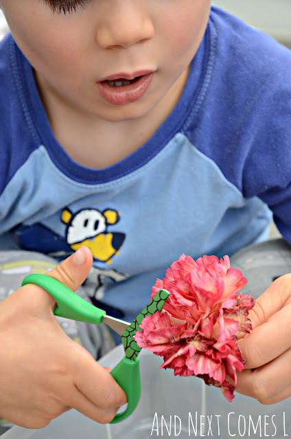 Kid practicing cutting skills with fresh flowers