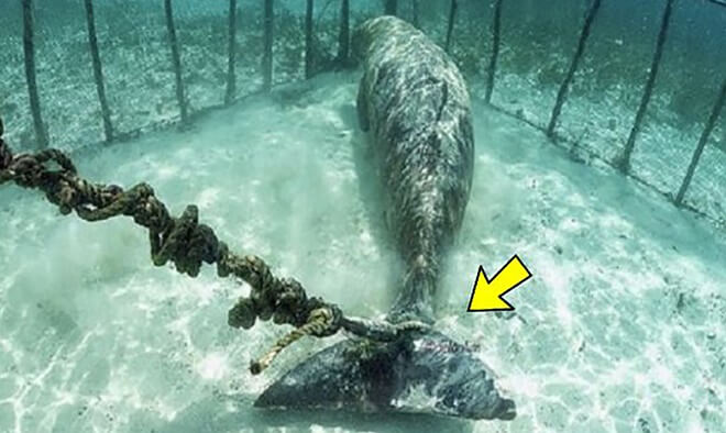 Large Sea Animals  Found Chained Underwater Inside Cages