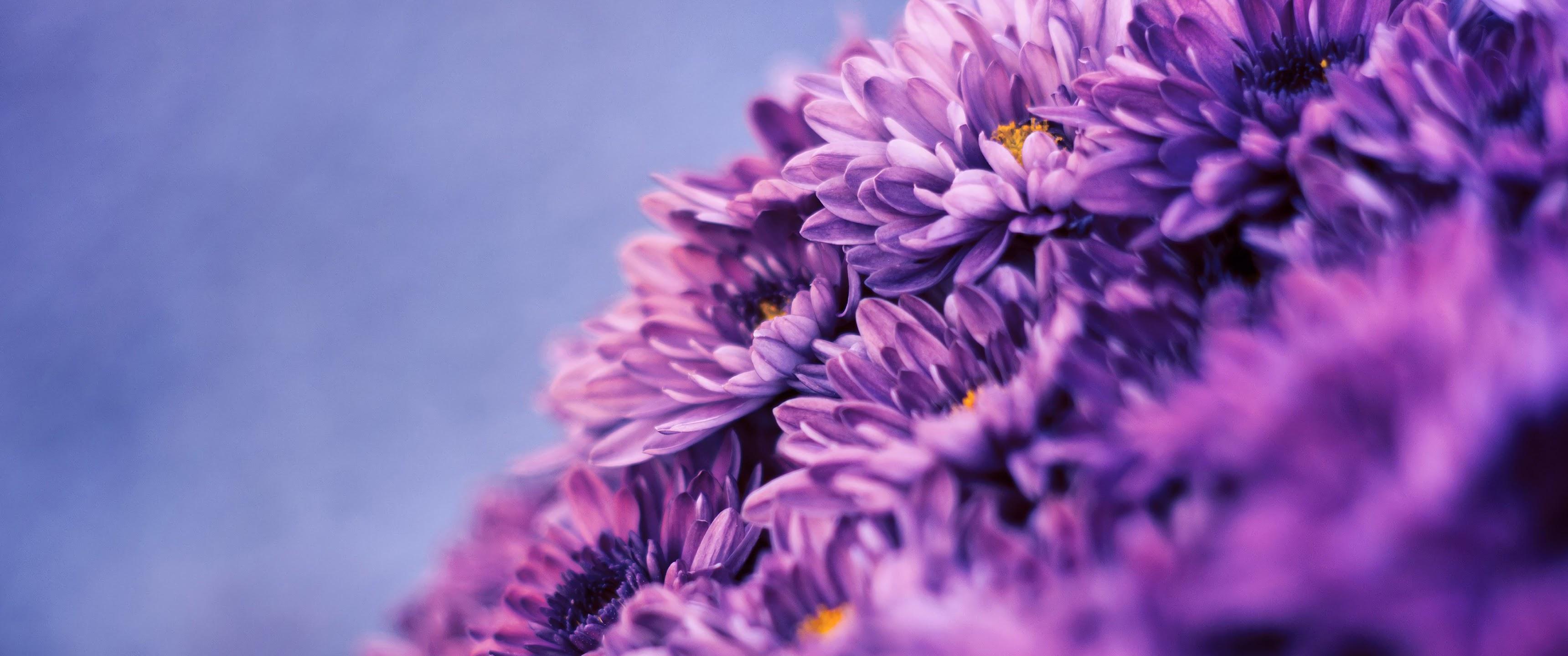 Purple Flower, Nature, 4K, 3840x2160, #86 Wallpaper