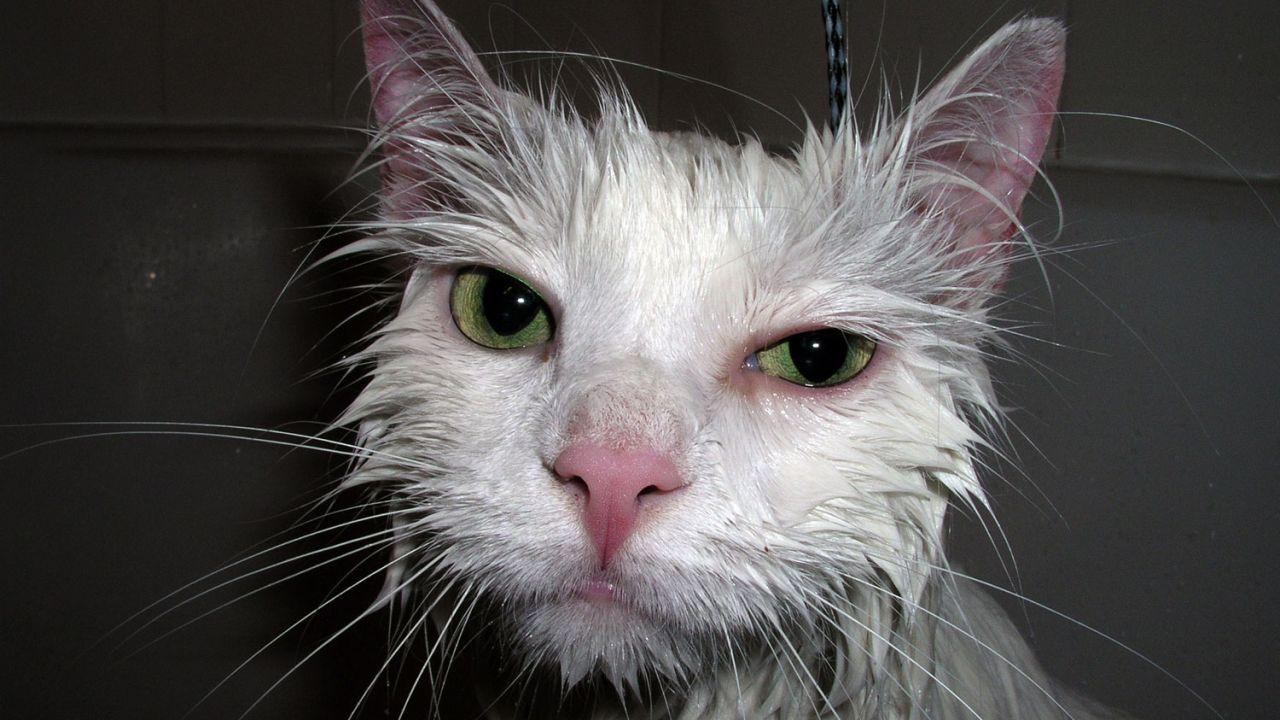 девушки фото киска мокрая были нам