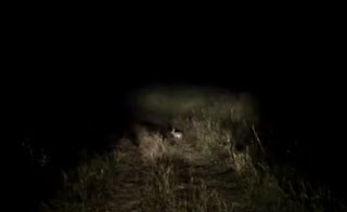 Охота с фарой