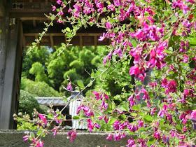 圓應寺のハギ