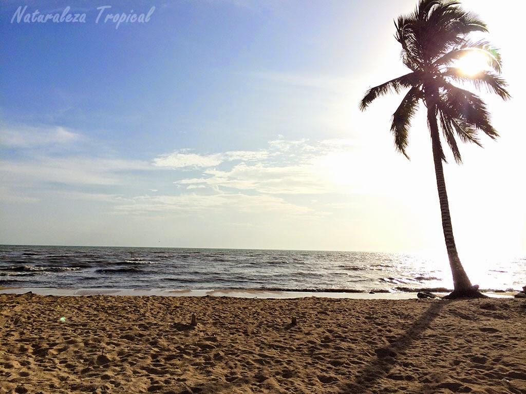 Fotografía de la playa Mayabeque