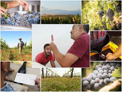 cantina petracavallo mottola vini