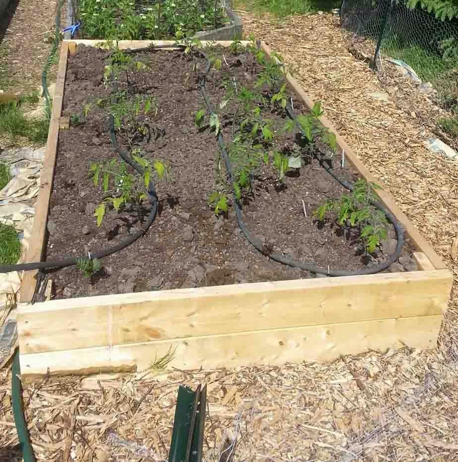 The Gardening Me: What's Happening In The Garden