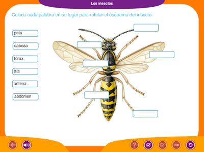 http://www.ceiploreto.es/sugerencias/juegos_educativos_6/4/5_Los_insectos/index.html