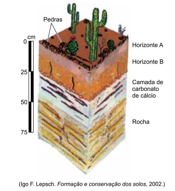 Igo F. Lepsch. Formação e conservação dos solos, 2002