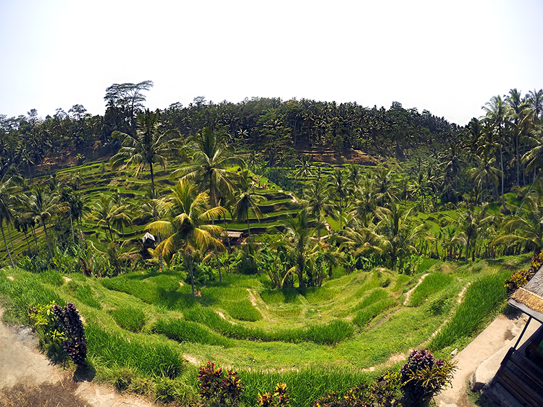 Euriental | fashion & luxury travel | Ubud, Bali, rice paddies