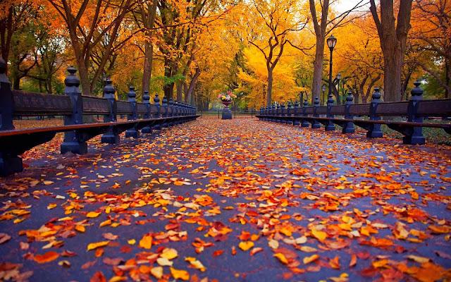 Park bezaaid met herfstbladeren