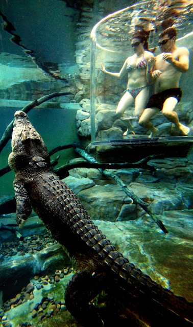 Crocosaurus Cove, Darwin City