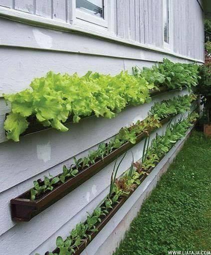 Inspirasi Kebun Rumah - liataja.com