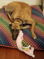 dog lying on colorful bed with toy