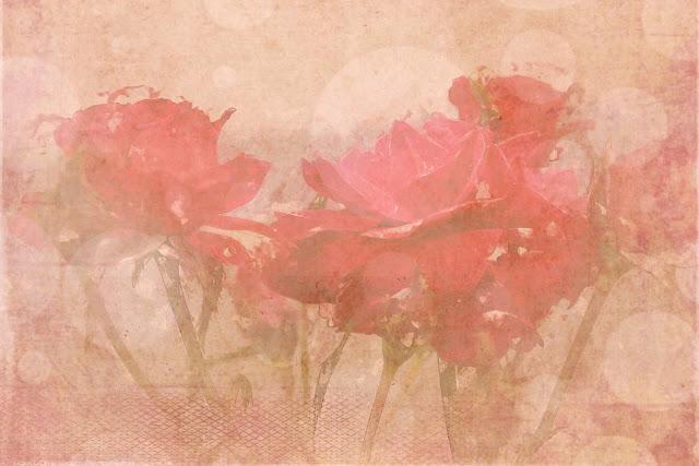 Rosa, criança,passeio, flores