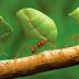 Contoh Semut Sebagai Pelajaran Hidup, Nih..