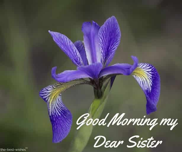 good morning my dear sister