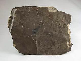 Esquisto Bituminoso | Las rocas sedimentarias